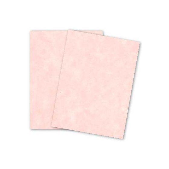 Astroparche - SHELL - 8.5 x 11 Parchment Card Stock - 65lb Cover - 250 PK [DFS-48]